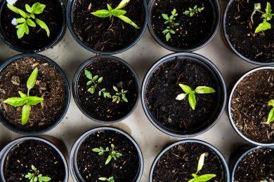 green plants green fleet