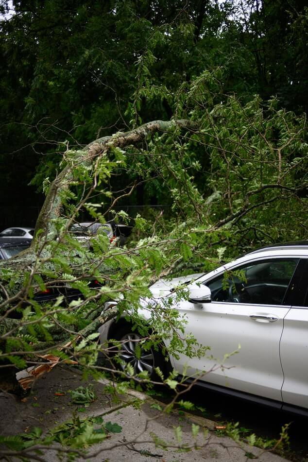 business vehicle trapped under fallen tree branches in need of business car insurance